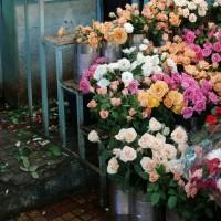 http://www.aixpoz.com/sites/bmanoukian/medias/images/galerie_5/L1030788bis.jpg
