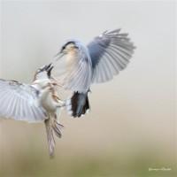 http://www.aixpoz.com/sites/brunovincent/medias/images/galerie_4/_DSC1175.JPG