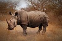 http://www.aixpoz.com/sites/fanterion/medias/images/galerie_8/B3-Rhinoceros_1.jpg