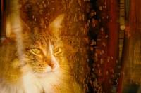 http://www.aixpoz.com/sites/jpage/medias/images/galerie_accueil/JAC_103_.JPG