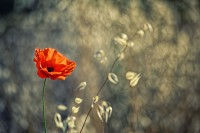 http://www.aixpoz.com/sites/jpage/medias/images/galerie_accueil/JAC_110_.JPG