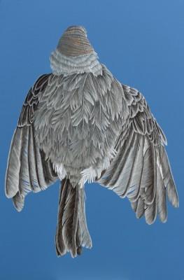 Oiseau N 11.72dpi. 2016