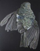 http://www.aixpoz.com/sites/nidrouge/medias/images/galerie_4/Oiseau_N__7.2009.jpg