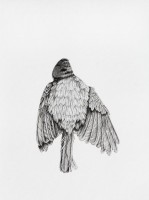 http://www.aixpoz.com/sites/nidrouge/medias/images/galerie_41/Oiseau11_serie3.2016SITE.jpg