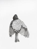 http://www.aixpoz.com/sites/nidrouge/medias/images/galerie_41/Oiseau12_serie3SITE.2016.jpg