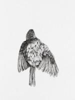 http://www.aixpoz.com/sites/nidrouge/medias/images/galerie_41/Oiseau13_serie3SITE.2016.jpg