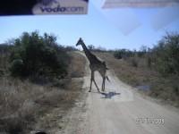 http://www.aixpoz.com/sites/pierrebruneau33/medias/images/galerie_21/Girafe_2.JPG
